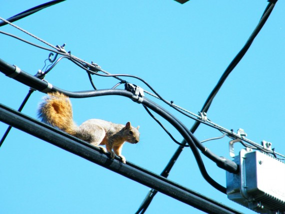 squirrel-on-wire-570x427
